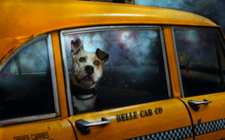 Yellow Cab Dog para Nokia Asha 201