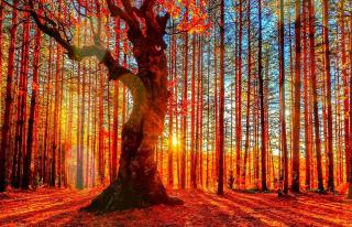 Forest Autumn Sunset