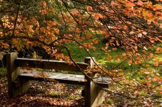 Autumn Bench para Nokia X2-01