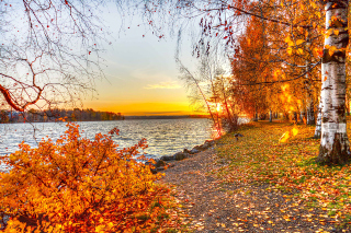 Autumn Trees By River