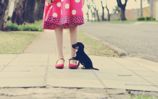Girl In Polka Dot Dress And Her Puppy
