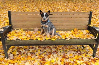 Dog On Autumn Bench