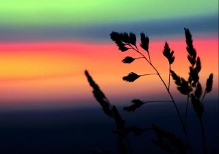 Herbs And Rainbow Sky para Motorola RAZR XT910
