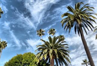 Palms Hebus