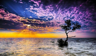 Magnificent Sunset On Sea