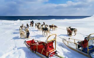 Alaska Dog Sleds