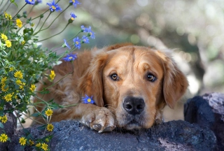 Sad Dog