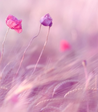 Pink & Purple Flower Field para Huawei G7300