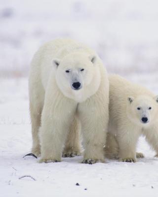 Polar Bears in Canada para Samsung GT-S5230 Star