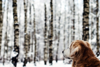 Dog Looking At Winter Landscape