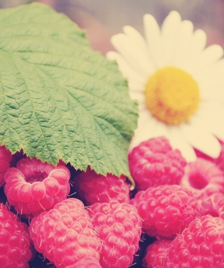 Raspberries And Daisy para LG BL40 New Chocolate