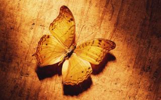 Glitter Gold Butterfly