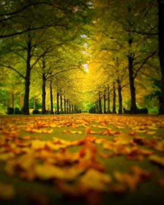 Autumn Park para Huawei G7300