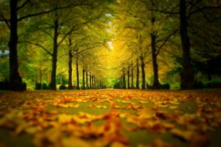 Autumn Park per Nokia Asha 302