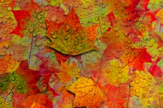 Abstract Fall Leaves para Blackberry RIM Curve 9360
