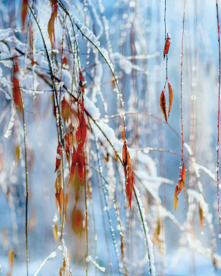 Macro Winter Photo para Huawei G7300