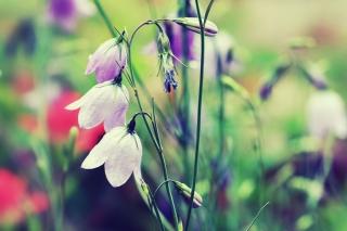 Purple Bells Flowers