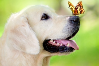 Butterfly On Dog's Nose