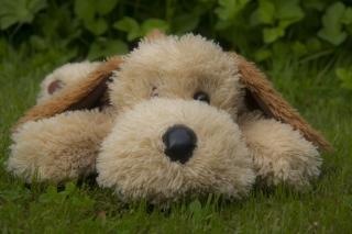 Lonely Plush Dog para Nokia X2-01