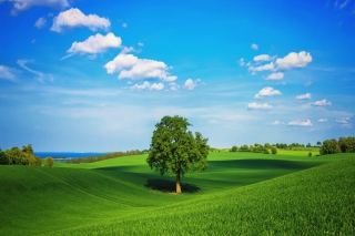 Green Hills para Nokia Asha 201