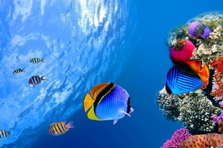 Underwater Life per Nokia Asha 302