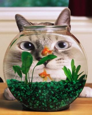 Aquarium Cat Funny Face Distortion for 480x854