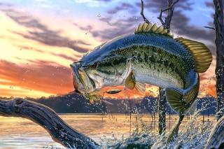 Percidae Fish per Nokia Asha 302