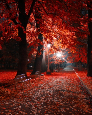 Romantic Fall Park para Huawei G7300