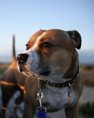 Dog Friend para Blackberry RIM Torch 9800