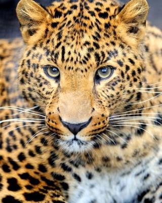 Leopard Predator para Nokia 5230