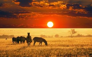 Zebras At Sunset In Savannah Africa