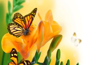 Orange Butterflies - Chlosyne gabbii para Blackberry RIM Curve 9360
