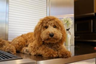Funny Plush Dog