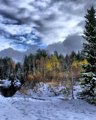 Winter in taiga forest para Nokia 5230