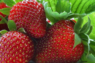 Macro Strawberries para Motorola RAZR XT910