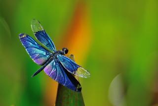 Dragonfly para Nokia X2-01