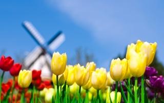 Keukenhof Holland Tulips Park para Nokia X2-01