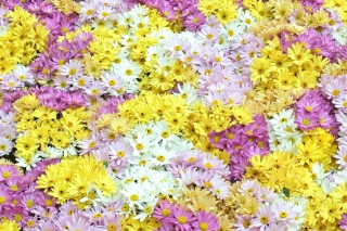 Yellow, White And Purple Flowers