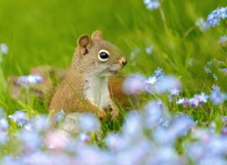Funny Squirrel In Field para LG E400 Optimus L3