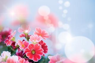 Bokeh Bright Flowers para Sony Ericsson XPERIA X8