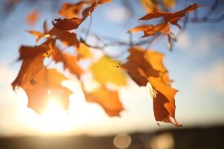Autumn Leaves In Sun Lights