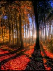 Awesome Fall Scenery for Nokia Asha 303