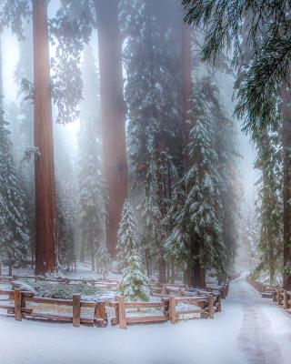 Sequoia in Winter para Nokia 5230