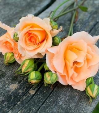 Delicate Orange Rose Petals para LG BL40 New Chocolate