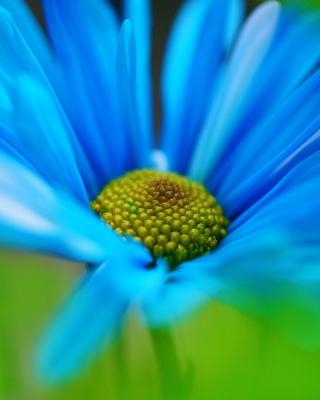 Macro Blue Flower per Nokia Lumia 800