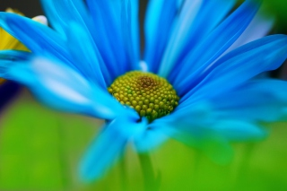 Macro Blue Flower para Motorola RAZR XT910