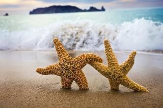 Sea Stars Dance