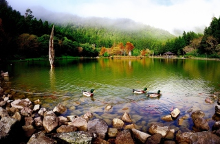 Picturesque Lake And Ducks