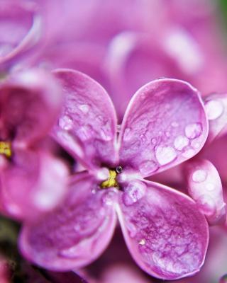 Macro Purple Flowers per Nokia N8