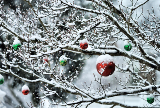 Decorated Tree Branches para Nokia X2-01